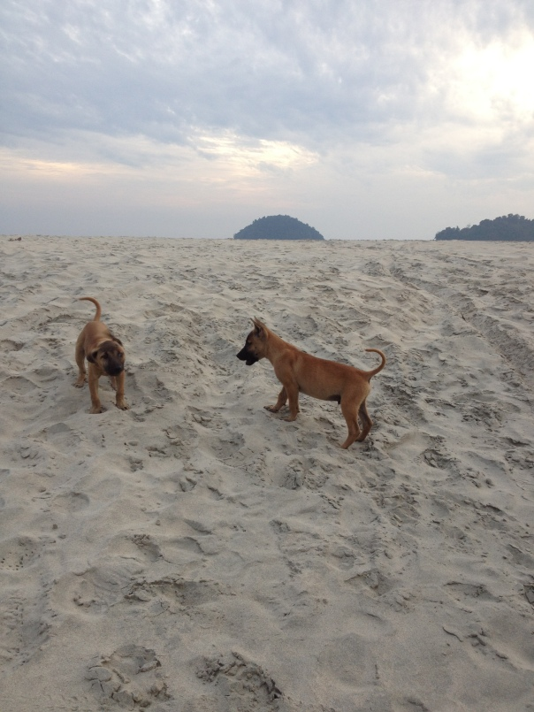 Walkies on the beach
